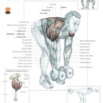 bent-over-lateral-raises