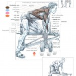 one-arm-dumbbell-rows