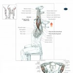 seated-dumbbell-triceps-extensions