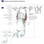seated-ez-bar-triceps-extensions