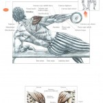 side-lying-lateral-raises