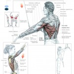 straight-arm-lat-pulldowns